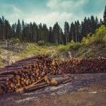 ¿Qué madera se utiliza en la fabricación de palets?