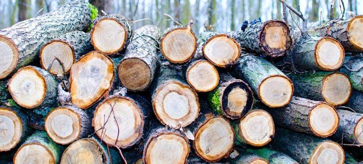 Escasea la madera para fabricar palés